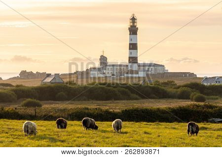 Ushant island countryside scenery of sheeps gazing and Creach lighthouse, Brittany, France