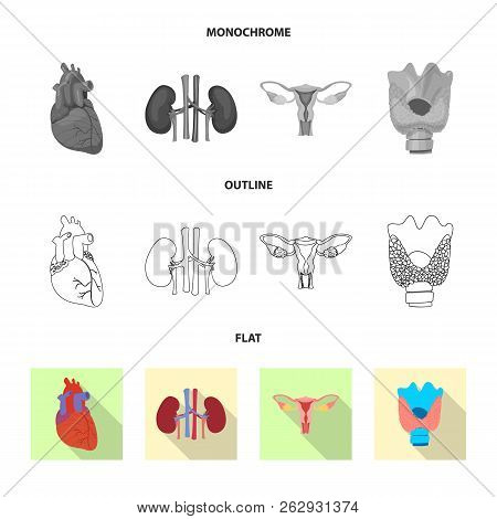 Vector Illustration Of Body And Human Symbol. Collection Of Body And Medical Stock Symbol For Web.
