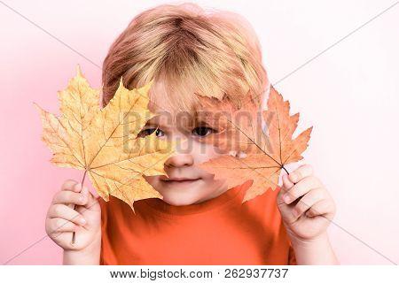 Autumn. Little Boy Hides Behind Maple Leaf. Happy Childhood. Autumn Time. Little Boy Holds Maple Lea