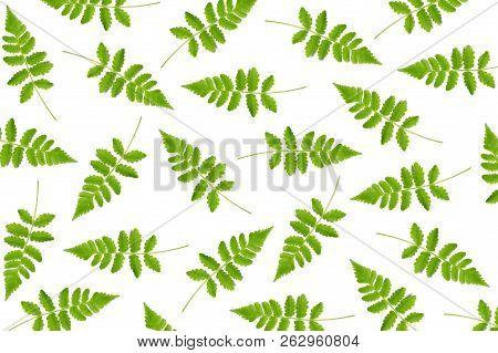 Vegetable Fern Leaf, Diplazium Sp., As A Background