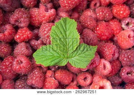 Green Leaf Of Raspberry