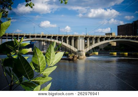 Daytime view of the I-35W Bridge in downtown Minneapolis with the Mississippi River in the foreground. Summer leaves in foreground poster
