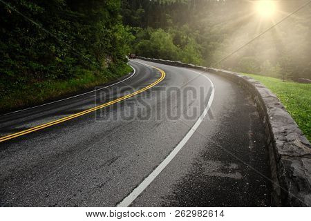 Road with cars, curve summer green trees  and sun