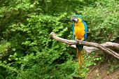 macaw on the branch poster