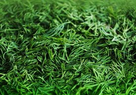 Seasoning From The Green Fennel Cut For Drying, Spices Background