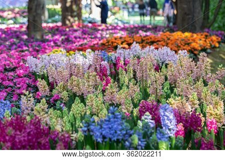 Flower In Garden At Sunny Summer Or Spring Day For Postcard Beauty Decoration And Agriculture Concep