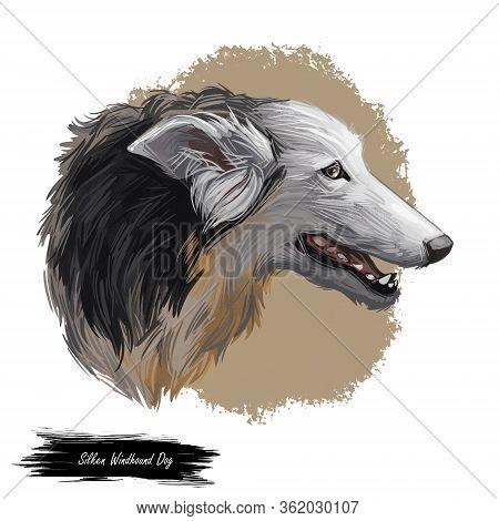 Silken Windhound Dog Isolated Digital Art Illustration. Hand Drawn Dog Muzzle Portrait, Puppy Cute P