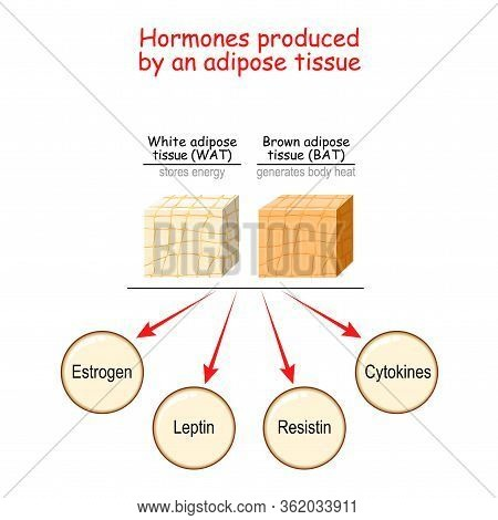 Hormones Produced By Adipocytes. Brown Adipose Tissue (bat) And White Adipose Tissue (wat). Cytokine