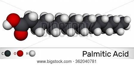 Palmitic Acid Or Hexadecanoic, C16h32o2 Molecule. It Is Saturated Fatty Acid. Molecular Model. 3d Re