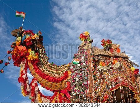 Beautiful Amusing Decorated Camel With Indian Flag On Bikaner Camel Festival In Rajasthan, India. Th