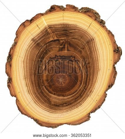Wood Slab Wuth Unusual Texture. Detailed Acacia Wood Cross Section With Growth Rings, Cracks And Bar