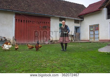 Salaj/romania - May 16, 2018: Old Lady Feeding Her Chickens In The Yard In Countryside