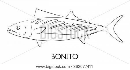 Bonito Fish. Commercial Fish Species. Colored Vector Illustration. Linear Icon. White Isolated Backg