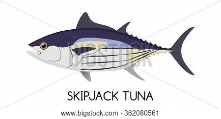 Tuna. Skipjack Tuna. Commercial Fish Species. Colored Vector Illustration. Flat Icon. White Isolated