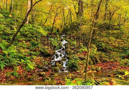 Natural Stream Flow Down From The Mountain Passing Rocks Covered With Colorful Falling Leaves At Oir