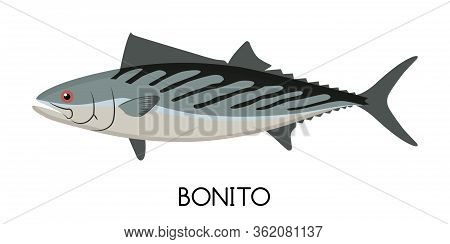 Bonito Fish. Commercial Fish Species. Colored Vector Illustration. Flat Icon. White Isolated Backgro