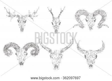 Vector Set Of Silhouettes Skulls Of Horned Animals Buffalo, Deer, Bull And Ram On White Background.
