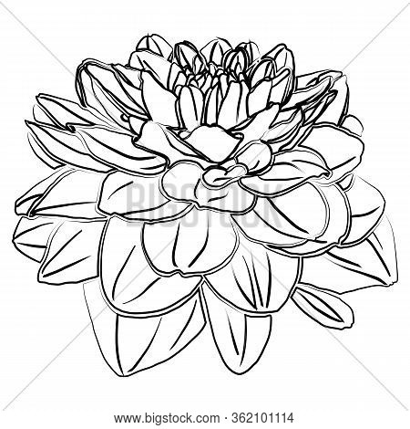 Retro Dahlia Silhouette Isolated On White Backdrop, Great Design For Any Purposes. Floral Vector Ill
