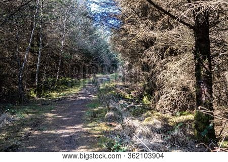 Dry Forest At Bonny Glen In County Donegal - Ireland