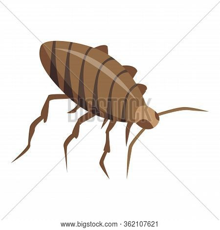 Cockroach Insect Icon. Isometric Of Cockroach Insect Vector Icon For Web Design Isolated On White Ba