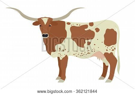 Texas Longhorn Cow Breeds Of Domestic Cattle Flat Vector Illustration Isolated Object On White Backg