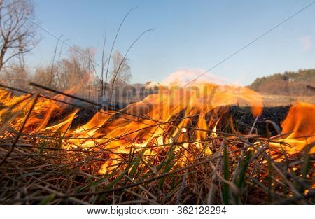 Ukraine Massive Fire In Forest, Dry Grass Lanes And Forest In Fire Disaster, Ecological Catastrophe