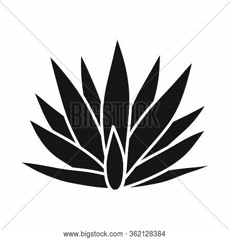 Isolated Object Of Agave And Tequila Logo. Graphic Of Agave And Blue Stock Symbol For Web.
