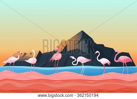 Animal Flamingo Place, Natural Landscape Flat Vector Illustration. Beautiful Poultry Stand Shallow W