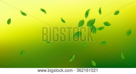 Falling Green Leaves. Fresh Tea Neat Leaves Flying. Spring Foliage Dancing On White Background. Amaz