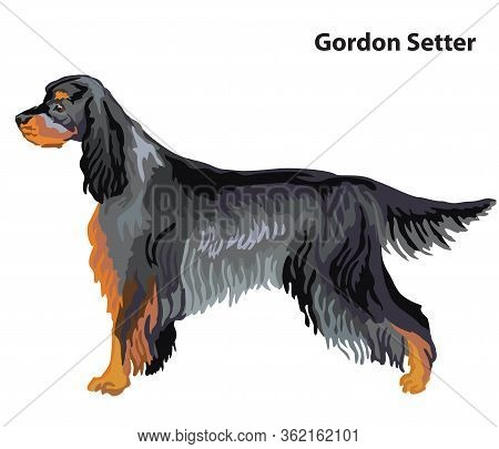 Colorful Decorative Portrait Of Standing In Profile Dog Gordon Setter, Vector Isolated Illustration