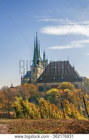 View Of Erfurt Cathedral From Vineyard, Germany
