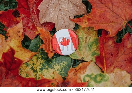 Round Circle Badge Canadian Flag. National Symbol Lying On Ground In Autumn Fall Maple Leaves. Autum