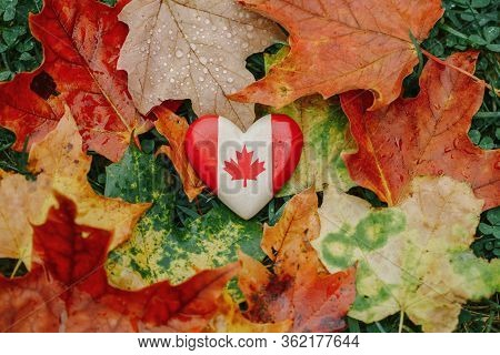 Heart Shape Wooden Canadian Flag. National Symbol Lying On Ground In Autumn Fall Maple Leaves. Autum