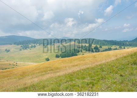 Foggy Morning Mountain Meadow, Pine Trees, Forests, Yellow Pastures And Hills Against Cloudy Sky