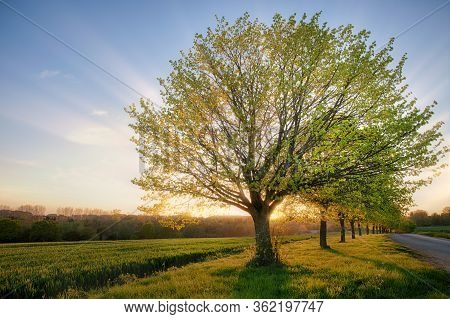 Beautiful Dawn Sunrise Over A Rural Landscape Through A Line Of Trees In Springtime. Farmland And A
