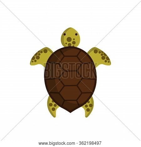 Turtle Top View Isolated On White Background.turtle Icon. Marine Life Concept. Vector Stock