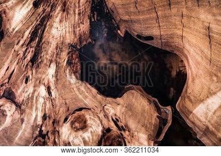 Texture Cross Section Of Elm Tree. Natural Burl Wood Background. Wood Surface. Exotic Wooden Beautif
