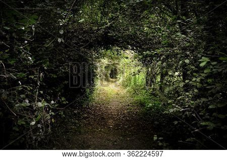 Passage Through An Intricate And Dark Wood