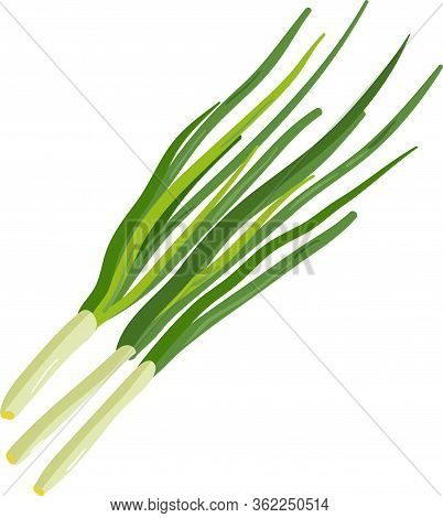 Green Onion. Vector Icon Illustration. Ripe Vegetable Bitter Onion With Green Stem.