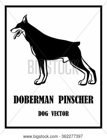Black And White Vector Illustration Logo Of A Doberman Pinscher Dog. It Is Standing.