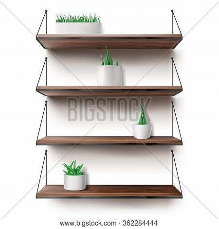 Wooden Shelves Hanging On Ropes With Plants In Ceramics Pots. Front Racks On White Wall Background.