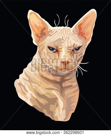Vector Colorful Drawing Portrait Of Angry Sphinx Cat Isolated On Black Background. Colorful Realisti