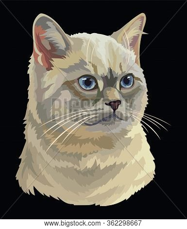Colorful Vector Drawing Portrait Of British Cat Isolated On Black Background. Realistic Portrait Of