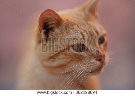 Funny Ginger Cat Closeup Portrait With Dirty Unwashed Face