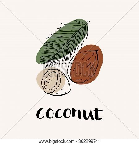 Coconut Black And White Vector Hand Draw Sketch With Colored Spots. Hand Lettering Text. Coconut Ico