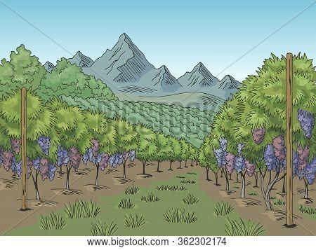 Vineyard Graphic Color Grape Plantation Landscape Sketch Illustration Vector