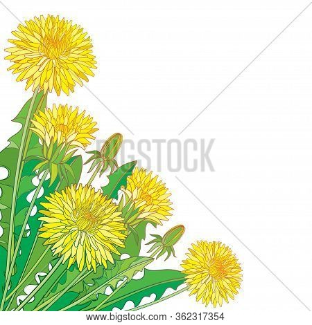 Vector Corner Bouquet With Outline Yellow Dandelion Flower, Bud And Ornate Green Leaves Isolated On