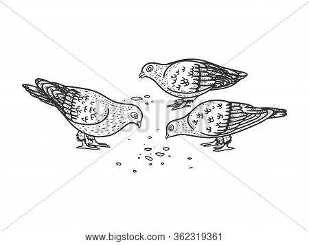 Pigeons Peck Seeds On The Ground Sketch Engraving Vector Illustration. T-shirt Apparel Print Design.