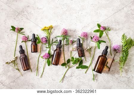 medical flowers herbs essential oils in bottles. alternative medicine. clover milfoil tansy rosebay