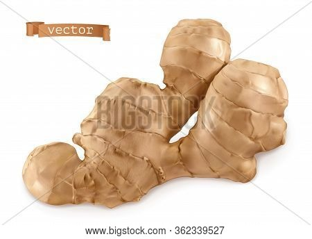 Ginger Root On White Background. 3d Realistic Vector